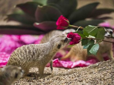 "Love is in the air at the <a href=""https://www.thestranger.com/events/42465042/love-at-the-zoo"">Point Defiance Zoo &amp; Aquarium</a> this Valentine's Day."