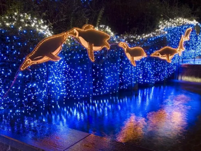 """Drive or walk through the Oregon Zoo's <a href=""""https://everout.com/portland-mercury/events/zoolights/e38304/"""">ZooLights</a> display when you need a reminder of what's good in the world (magical penguins)."""