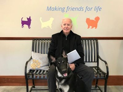 """Before Joe Biden the human gets sworn in as the 46th President of the United States next week, pay tribute to incoming First Dog Major Biden at a <a href=""""https://everout.com/stranger-seattle/events/major-bidens-virtual-indoguration-party/e40375/"""">Virtual Indoguration Party</a> with the Delaware Humane Association this Sunday."""