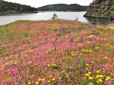 Plants on Islands: Insights into the Flora of the San Juan Islands