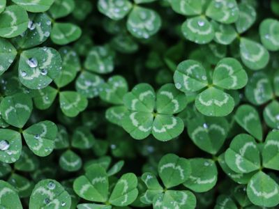 From soda bread kits to a socially distanced 5K, there are plenty of ways to celebrate St. Patrick's Day in a COVID-safe manner this year.
