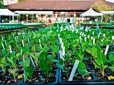 """You'll find 70 varieties of tomatoes and 30 types of peppers at the Tilth Alliance's <a href=""""https://www.thestranger.com/events/39631754/tilth-alliances-may-edible-plant-sale"""">May Edible Plant Sale</a>."""