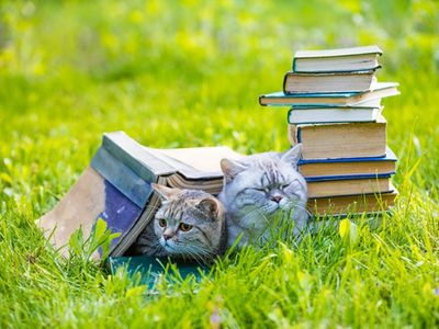 Whisker yourself away to literary wonderland this summer.