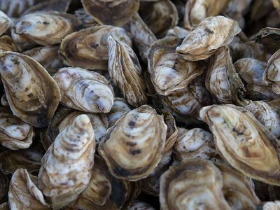 """While you slurp Hama Hama oysters and drink local beer and wine at <a href=""""https://www.thestranger.com/events/42321020/alki-oyster-fest"""">Alki Oyster Fest</a> on Sunday, you'll be helping restore local marine habitats through the Puget Sound Restoration Fund. Good on you!"""