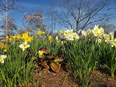 """Sign up to spread mulch and pull weeds at local parks and gardens (like the <a href=""""https://everout.com/seattle/events/earth-day-at-the-arboretum/e99646/"""">Washington Park Arboretum</a> on Saturday, April 24) to make room for pollinator magnets like these."""