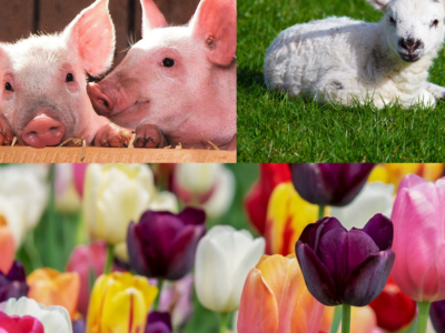 """Up for a southbound day trip to Buckley, Washington? Maris Farms' three-weekend-long <a href=""""https://everout.com/seattle/events/baby-animals-and-blooms-days/e99363/"""">Baby Animals and Blooms Days</a> kicks off this Saturday. Spots are limited, so be sure to reserve a ticket online."""