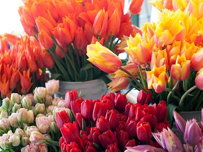 """The <a href=""""https://everout.com/seattle/events/pike-place-market-flower-festival/e99863/"""">Pike Place Flower Festival</a> returns this Saturday and Sunday with even more fresh bouquets of tulips, daffodils, irises, and peonies than usual."""
