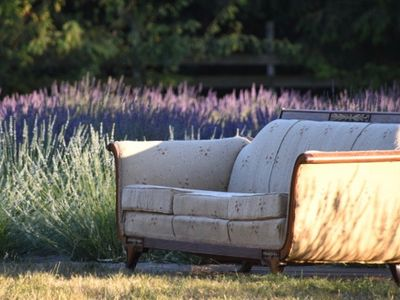 """Sate your affinity for fragrant flowers and thrifting at Wayward Winds Lavender Farm's <a href=""""https://everout.com/portland/events/lavender-vintage-festival/e100194/"""">Lavender &amp; Vintage Festival</a>."""