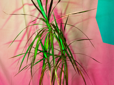 """Portland artist Kelda Van Patten comments on this past year's houseplant craze in her new solo exhibition <a href=""""https://everout.com/portland/events/nature-inside/e102986/""""><em>Nature Inside</em></a>, opening Saturday at Well Well."""