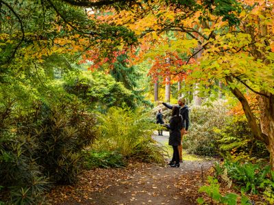"""Take a leisurely weekend drive down to Federal Way to see the trees poppin' off at the Rhododendron Species Botanical Garden's <a href=""""https://everout.com/seattle/events/fall-foliage-festival/e104874/"""">Fall Foliage Festival</a>."""